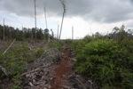 Deforested rainforest in Borneo [kalbar_2255]