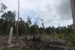 Deforested landscape in Borneo [kalbar_2253]