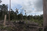 Deforested peatlands in Borneo [kalbar_2198]