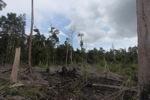 Deforested peatlands in Borneo [kalbar_2198]
