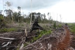 Deforested rainforest in Borneo [kalbar_2222]