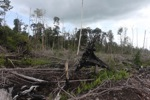 Cut, drained, and burned peat swamp forest [kalbar_2257]