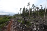 Deforested landscape in Borneo