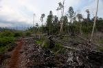 Deforested rainforest in Borneo [kalbar_2260]