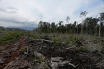 Cut, drained, and burned peat swamp forest [kalbar_2262]
