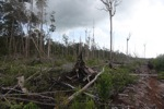 Deforested peatlands in Borneo