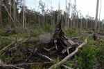 Deforested rainforest in Borneo