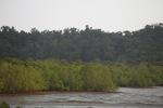 Mangrove forest [kalbar_2292]