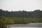 Mangrove forest [kalbar_2295]