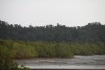 Mangrove forest [kalbar_2296]