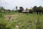 Organic farm in Borneo