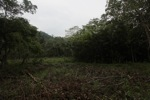 Forest clearing in Taman Hutan Raya