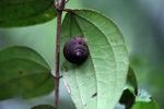Snail [kalsel_0128]