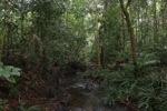 Forest ranger in Taman Hutan Raya