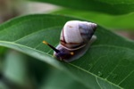 Colorful snail in Borneo