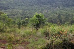 One Man One Tree reforestation project
