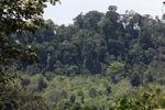 Forest margin in Bukit Barisan Selatan National Park