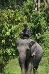 Mahout atop an Sumatran elephant [sumatra_9191]