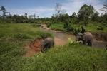 Mahout atop an Sumatran elephant [sumatra_9194]