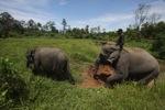 Mahout atop an Sumatran elephant [sumatra_9196]