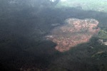 Degraded forest in Jambi