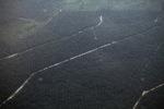 Oil palm plantation in Jambi [sumatra_9333]