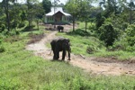 Sumatran elephant trained to reduce human-wildlife conflict
