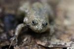 Strange toad [sumatra_9401]