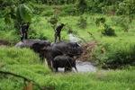 Sumatran elephant being washed by his mahout or elephant trainer [sumatra_9406]