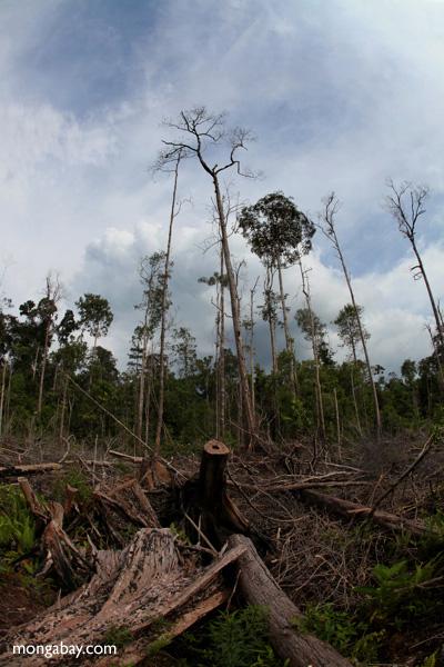 Devastated rainforest landscape in Borneo. Photo by Rhett A. Butler.