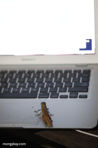 grasshoppers apparently use macs