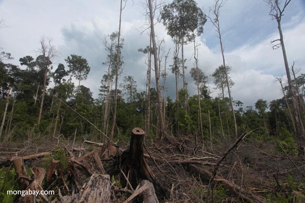 Deforestación en la parte Indonesia de Borneo.