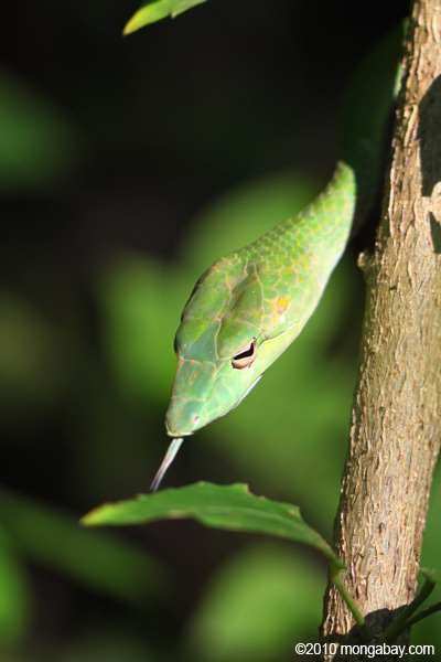 Sneaky Snakes in Indonesia