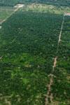 Palm oil plantations near frontier town, Coca, in the Ecuadorian Amazon