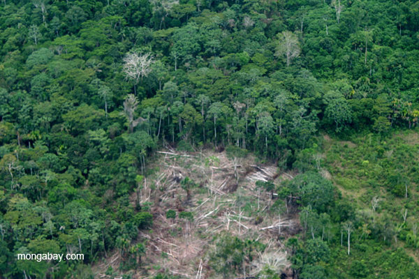 Recently cleared forest near frontier town, Coca, in the Ecuadorian Amazon