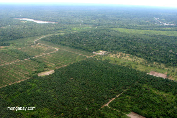 Palm oil plantations near Coca, Ecuador, in the Ecuadorian Amazon. One accounting trick used to avoid authentic zero deforestation is to adopt a standard known as