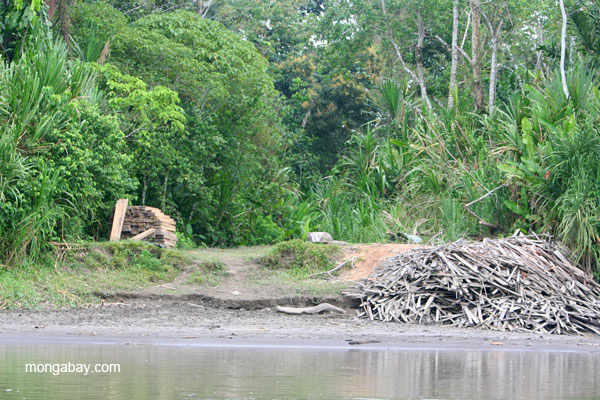 Wood on the bank of the Napo River in the Ecuadorian Amazon