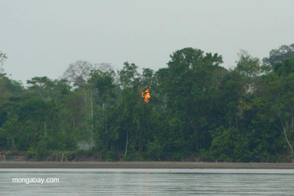 Oil tower's gas flare seen through the trees in the Ecuadorian Amazon