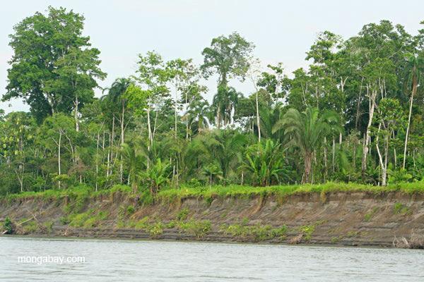 Degraded vegetation along the bank of the Napo River in the Ecuadorian Amazon