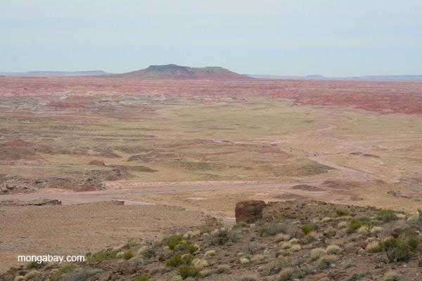 Landscape of the Petrified Forest National Park, Arizona