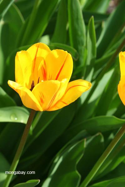 Flower (unidentified species) in Buffalo, Minnesota