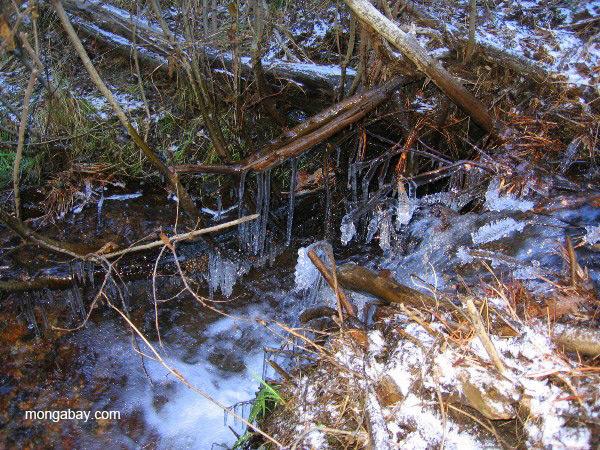 Frozen stream in Minnesota. Photo by: Tiffany Roufs.