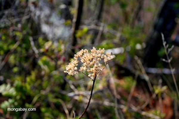 Flower near Two Harbors, Minnesota