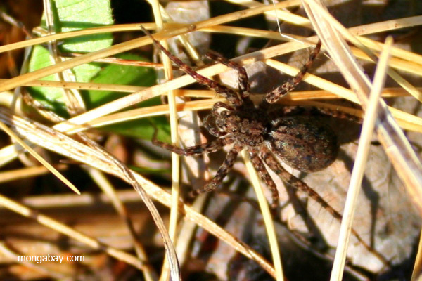 Spider (species unidentified) near Two Harbors, Minnesota