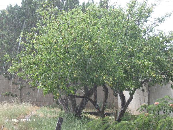 Rain in Santa Fe, New Mexico