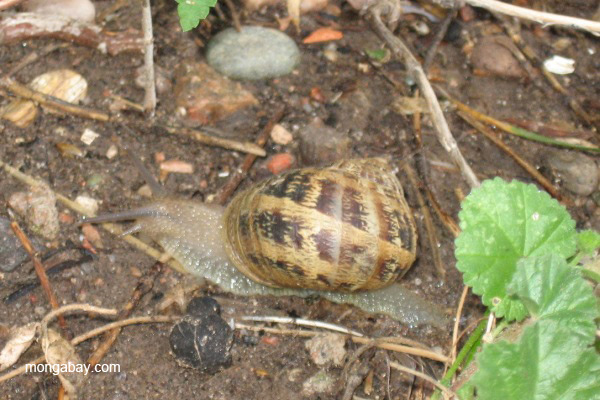 Snail (unidentified) in Santa Fe, New Mexico