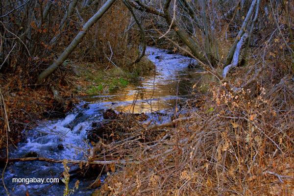 River in the Sangre de Cristo Mountains, New Mexico