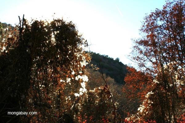 Landscape in the Sangre de Cristo Mountains, New Mexico