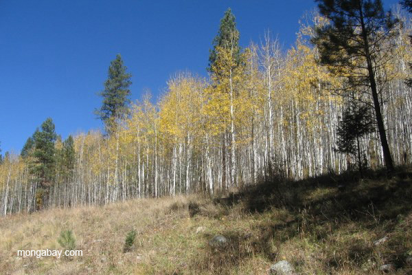 Fall colors in the Sangre de Cristo Mountains, New Mexico