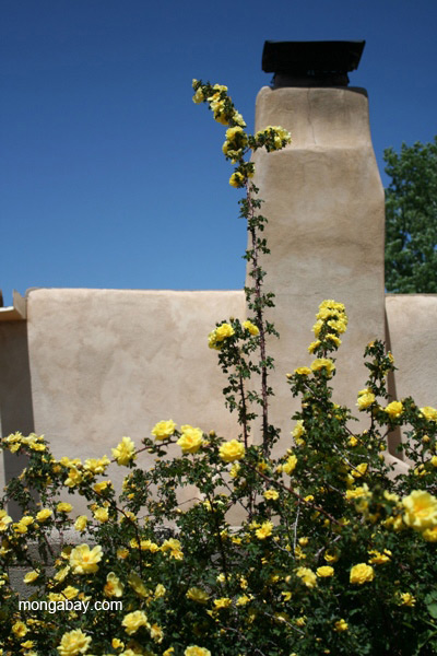 Roses and adobe house in Santa Fe, New Mexico